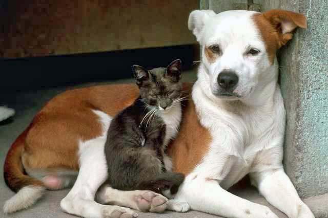 Angel Pets Pet Honoring Dog Cat