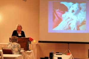 Angel Pets Conference 5