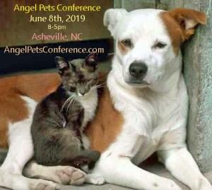AngelPets Cat dog 2019 ad copy