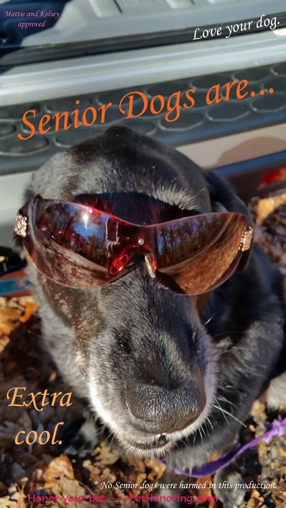 Mattie Senior