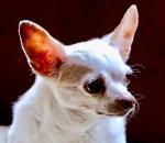 Earthwinds chiro dog