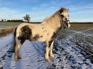 earthwinds chiro horse