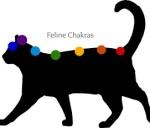 feline chakras
