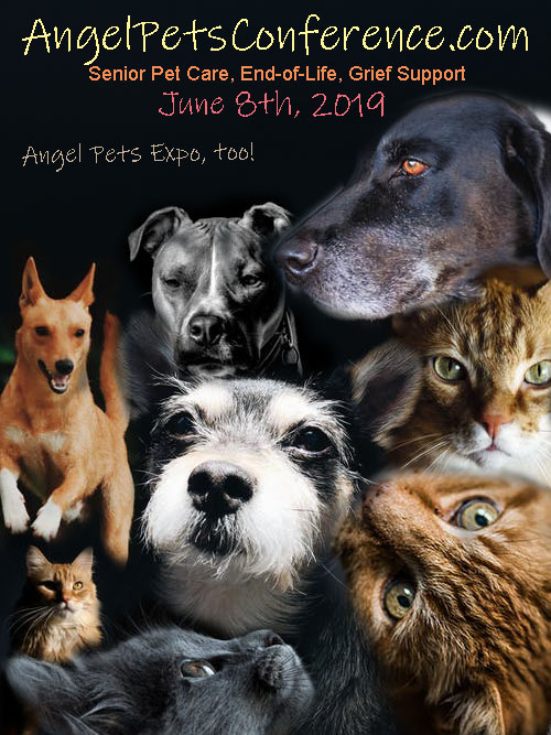 Angel Pets Conference 2019 Post