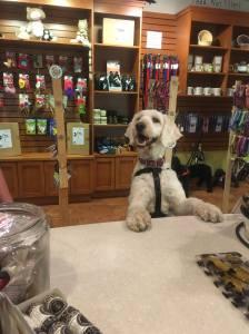 Angel Pets Expo 3 dog bakery pci