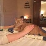 Marshall Reiki cat